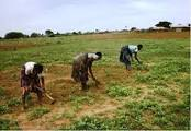 agric